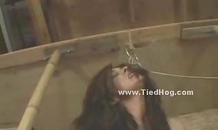 Sumptuous warm D/s with pointy nips strung up bound in straps in the air gets slapped frigged